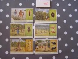 INSECTES DU CONGO NUISIBLES A L´ AGRICULTURE 480 Liebig Série Complète De 6 Chromos Trading Cards Chromo - Liebig