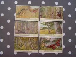 INSECTES GEANTS DU CONGO BELGE 462  Liebig Série Complète De 6 Chromos Trading Cards Chromo - Liebig