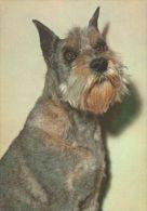 DOGS / HUNDE / CHIENS /  -    Postcard   Unused   ( P 2115 ) - Hunde