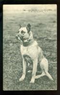 Douane  Frontière  Grens  :  Nos Douaniers   Un Ami  Chien  Dog  Hond - Douane