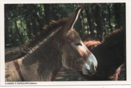 FRANCE -animaux - Le Profil Douce ÂNE. - Donkeys