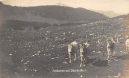 Z16184 Austria To Identify Feldwies Mit Durrenstein Cows Mountains - Autriche