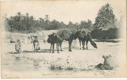 Bou Saada Sahara Dans La Riviere Edit Geiser No 15 Chameaux - Argelia
