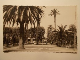 Carte Postale - HYERES (83) - Avenue De Belgique (266/100) - Hyeres
