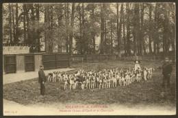 CHASSES A COURRE Meute De Chiens Et De Chevreuils (EP) Orne (61) - Zonder Classificatie