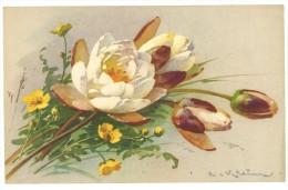 Cpa Signée Klein : Fleurs - Klein, Catharina