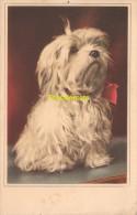 CPA CHIEN DOG HOND HUND - Hunde