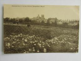 Cpa/pk 1924 Scherpenheuvel Rozenkwekerijen Gebroeders Michiels - Scherpenheuvel-Zichem