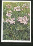 Künstler-AK Jean Zeltner: Blühendes Wiesen-Schaumkraut - Fleurs, Plantes & Arbres