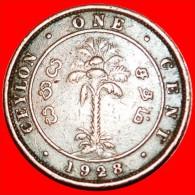 § PALM TREE: CEYLON ★1 CENT 1928! GEORGE V (1911-1936)! LOW START★ NO RESERVE! - Sri Lanka