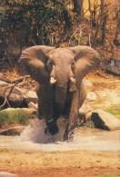 Sweden PPC Loxodonta Africana Afrikanischer Elefant Eléfant Elephant Photo : Tony Stone (2 Scans) - Éléphants