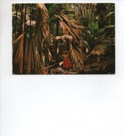 SEYCHELLES  ,  Vallee  De  Mai  , Praslin  * - Seychelles