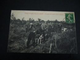 1 Cp La Chasse AU SANGLIER Dans Les LANDES - Hunting