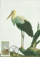 Venda 1984 Migratory Birds,Ciconia,Maximum Card - Venda