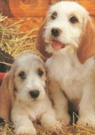DOGS / HUNDE / CHIENS /  -  Postcard   Used   ( P 2351 ) - Chiens