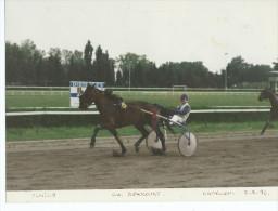 PHOTO GRAND FORMAT 24 X 18.ULMILLE Ch.BEAUCOURT Cavaillon 5-5-93 (cheval Trot Attelé Hippisme Turf Horse Sport Hippique - Sports