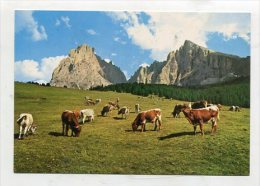 ITALY - AK 234201 Dolomiten - Seiseralm - Langkofel - Italie