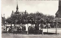 Retie, Oude Lindenboom (1485) (pk19828) - Retie