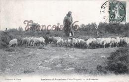 (33) Arcachon - Un Echassier Berger Avec Son Troupeau De Moutons Brebis - 2 SCANS - Arcachon