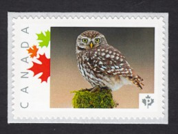NEW !  YOUNG OWL Picture Postage MNH Stamp,  Canada 2015 [p15/6ow4/4] - Owls