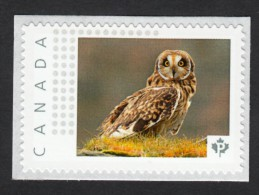 NEW ! OWL ON A GRASS Picture Postage MNH Stamp,  Canada 2015 [p15/6ow4/2] - Owls