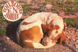 DOGS / HUNDE / CHIENS /  -     Postcard   Unused   ( P 2399 ) - Hunde