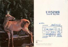 QSL-Karte Sowjetunion Ukraine Mykolajiw Nikolajew UB5ZKG 1989 Amateur Radio Card Cartolina Reh Deer Roe UdSSR USSR - QSL-Karten
