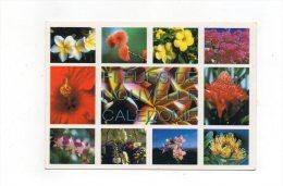 Fleurs De Nouvelle Calédonie - Ohne Zuordnung