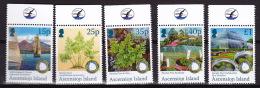 CRYPTOGAMEN -FERNS- VARENS- Ascension Island 2011 - Végétaux