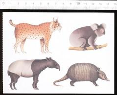 Animal Lynx Koala Tapir Tatou / Dessin Illustration Pittau-Gervais  // CP 68/22 - Autres