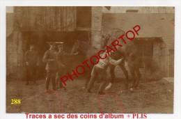 CHEVAL-JUMENT-ACTE EROTIQUE-Reproduction-Elevage-Agriculture-Animaux-CARTE PHOTO Allemande-GUERRE 14-18-1 WK- - War 1914-18