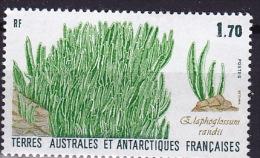 Cryptogamen - Sporenplanten - 1988 - Végétaux