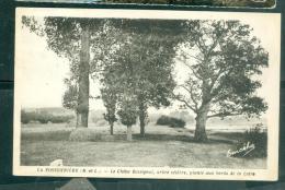 La Possonniere Le Chene Rossignol Arbre Celebre Plante Aux Bords De La Loire Rar168 - France