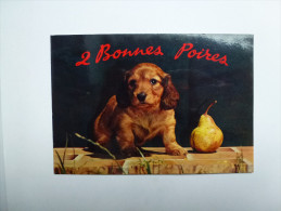 CP , Chien Setter , Chiot - Chiens