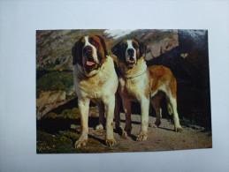 CP , Chiens De L' Hospice Du Grand Saint Bernard , Chien - Dogs