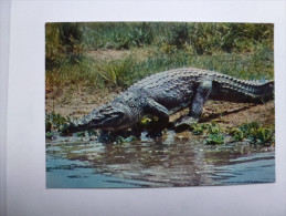 CP , Crocodile  , Faune Africaine - Animals