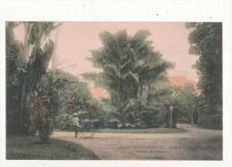 Viet Nam Tonkin Saigon Jardin Botanique Cpa Bon état - Vietnam