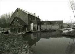 NIEUWRODE - Holsbeek (Vlaams-Brabant) - Molen/moulin - Historische Opname (1977) Van De Blauwmolen Op De Winge - Holsbeek