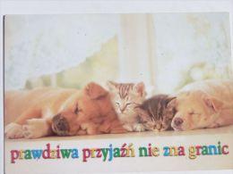 Dog  Chien  Hund  / Cat - Chiens