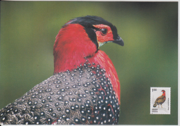 India  2006  Birds  Western Tragopan Stamp  Printed On Post Card ONLY NO STAMPS  2 Scans    # 84842  Inde  Indien - Unclassified
