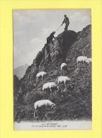 CPA 65 CAUTERETS Escalade Guide De Montagne Mouton Brebis Alpage - Cauterets