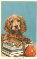 DOGS / HUNDE / CHIENS /  -    Postcard   Unused   ( P 2477 ) - Hunde