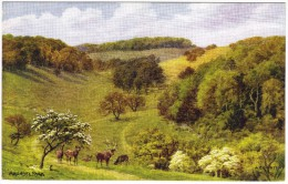 Arundel Park By A R Quinton Colour Postcard - Salmon No 2049 (early - No Leaping Salmon) - Quinton, AR
