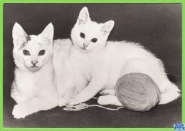 Voyo GERMANY/DDR  Zwei Kätzchen  Cat 1984 Unused Planet Nr 7798 Echt Foto - Chats