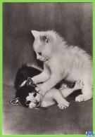 Voyo GERMANY/DDR  Zwei Kätzchen  Cat 1984 Unused Planet Nr 7800 Echt Foto - Chats