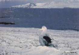 Photo A. FATRAS - Terres Australes Et Antarctiques Française  -  Poussin De Grand Albatros - TAAF : Terres Australes Antarctiques Françaises