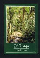 PUERTO-RICO -El YUNQUE  The Rain Forest - SCANS RECTO VERSO-PAYPAL FREE - Postcards