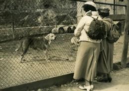 France Annecy Chiens De L'Hospice Du Mont Saint Bernard Ancienne Photo De Presse 1937 - Photographs