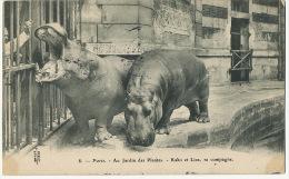 8 Paris Jardin Des Plantes Hippopotames Kako Et Liza Avec Leur Soigneur - Hippopotames