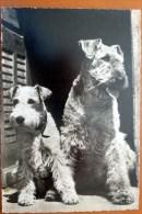 2 Hunde, Echtfoto, AK Nicht Gelaufen, DDR 1963 - Cani